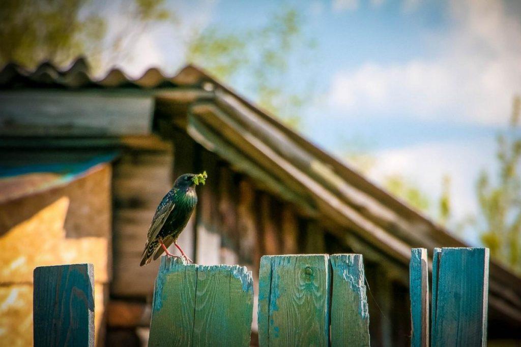 птица с листком